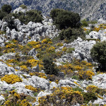 Wildlife walking holidays - Sierra de Grazalema