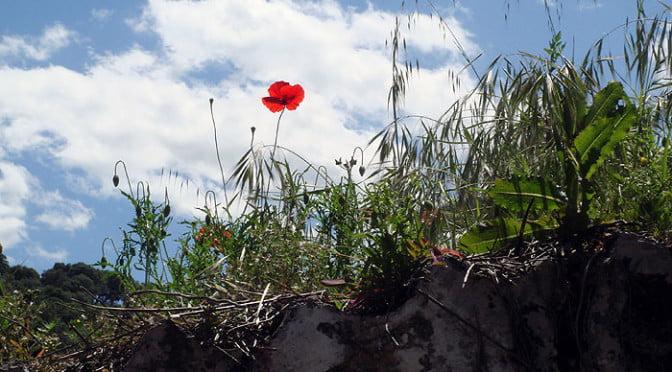 poppy-&-sky