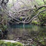rio-majaceite