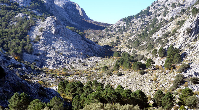 Ten of the best natural parks to observe birds and wildlife in Spain