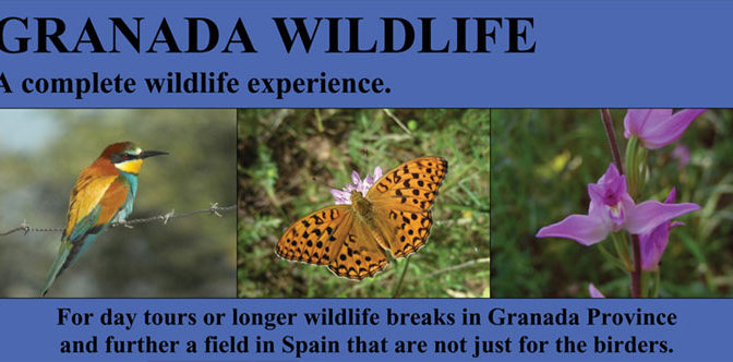 Granada wildlife with Mich Richardson