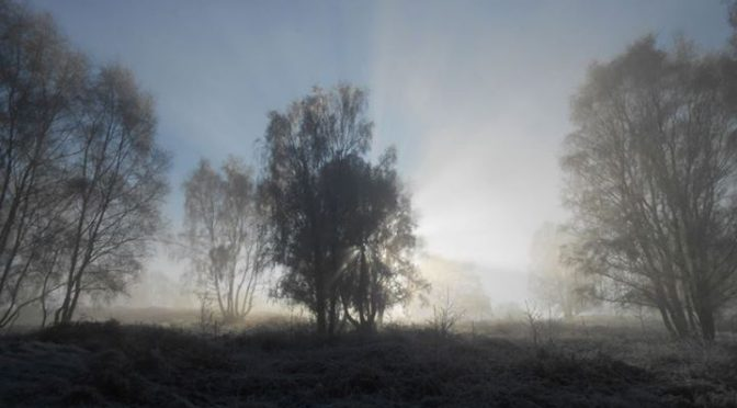 A frosty mornings walk on Milford Common, part of Cannock Chase.