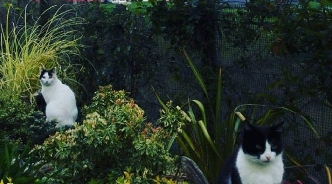 This gardening is going on a little too long ….don't forget its dinner time at…