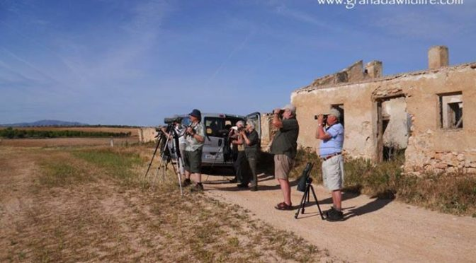 Some shots from day two of the latest Granada Wildlife tour in Andalucia. We spe…