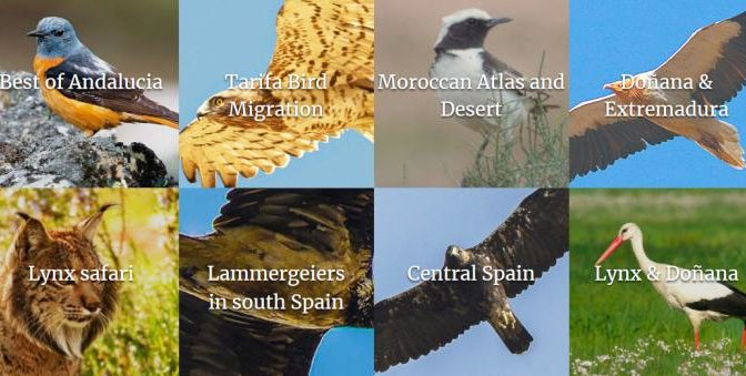 Wild Andalucia Wildlife and Birdwatching tours in Spain