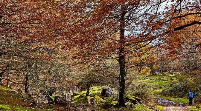 Walking in Navarra Natural Parks