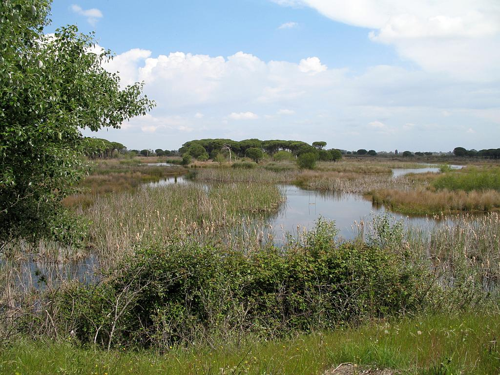 The Doñana National and Natural Parks occupy the northern area of the Guadalquivir river where it meets the Atlantic Ocean