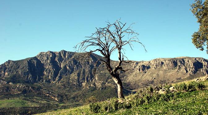 Wildlife walking holidays - Sierra de Grazalema