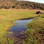 habitat---still-water