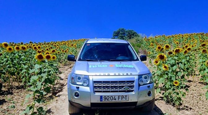 Its that time of year again, sunflowers are everywhere