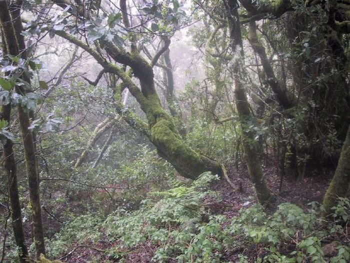 Rain Forest on the island of Gomera