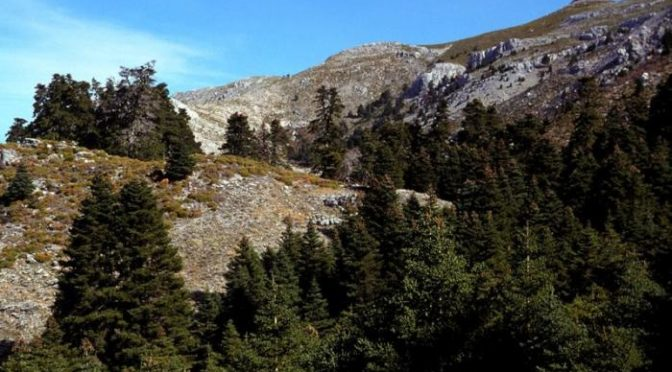 Sierra de las Nieves National Park (Almost)