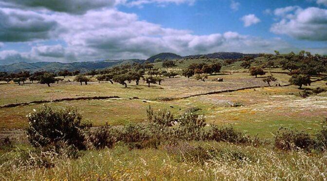 Sierra de Aracena y Picos de Aroche Natural Park