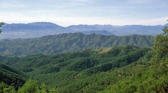Montes de Malaga Natural park in Andalucia