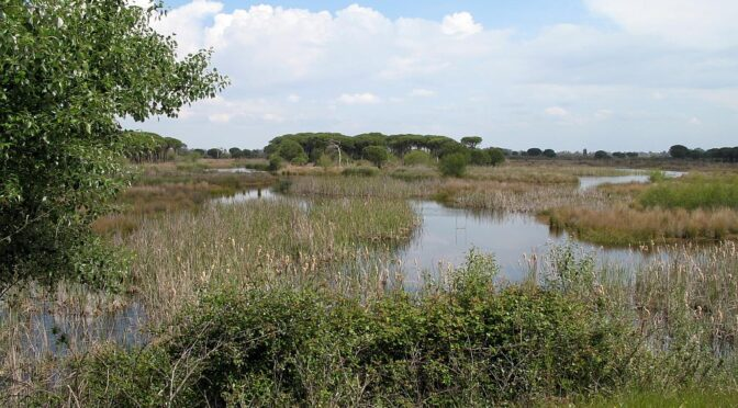 Doñana National and Natural Parks
