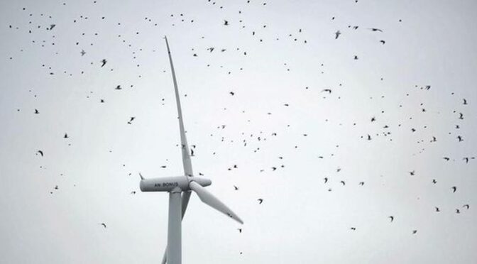 Painting one turbine blade black reduces bird fatalities by 72%, says study