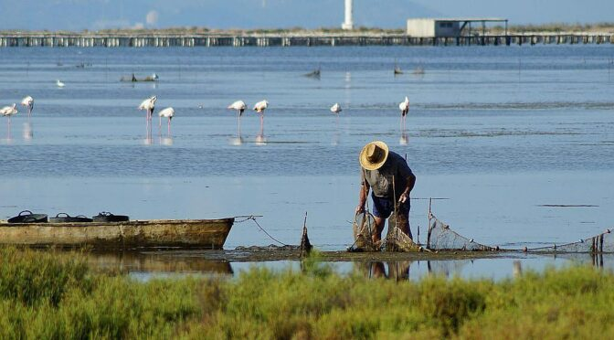 The Parque natural del Delta del Ebro holds a great importance internationally as more than 300 species of birds