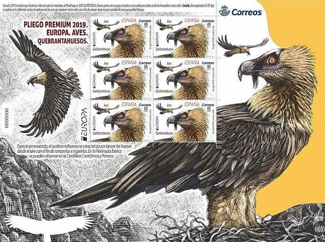 Bearded Vulture - Gypaetus barbatus - Quebrantahuesos