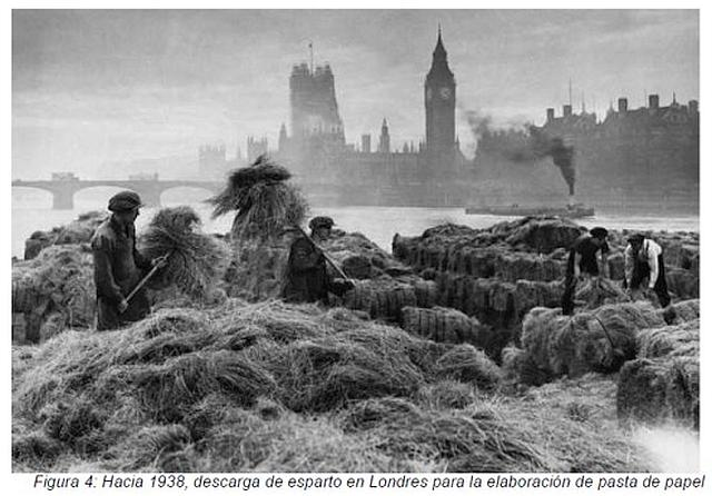 Esparto grass in London for paper production