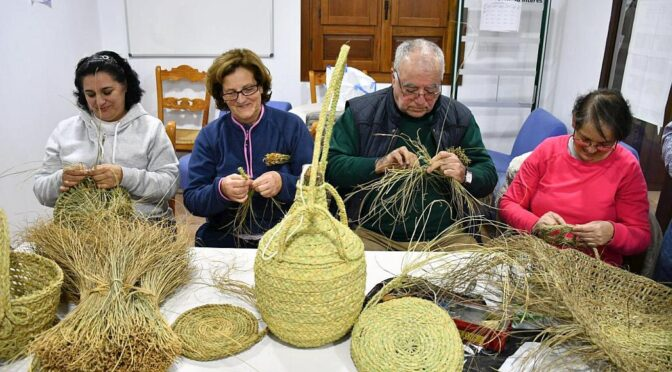 The Spanish esparto quality exceeds that of other Mediterranean countries because it contains a higher percentage of cellulose and the fibre is much finer.