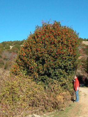 Garagüeta in Soria – Europe's largest Holly Wood