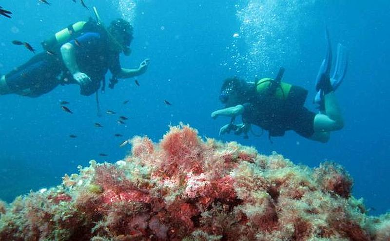 There are two marine reserves in Murcia that are famous worldwide for the quality of the diving available. Cabo Tiñoso marine reserve