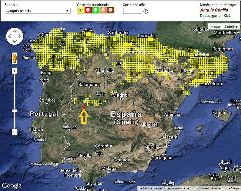 Spain Distribution map of the Slow Worm (Anguis fragilis) Lución