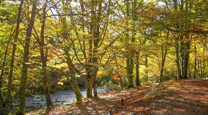 Hayedo de Montejo beech forest