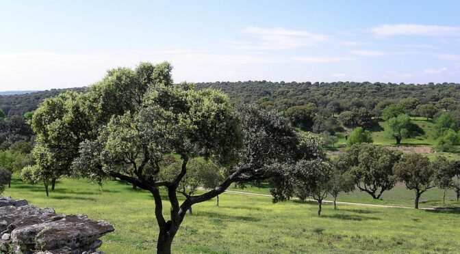 The Cuenca Alta del Manzanares Regional Park (Parque Regional de la Cuenca Alta del Manzanares) is one the largest protected natural areas in the Community of Madrid