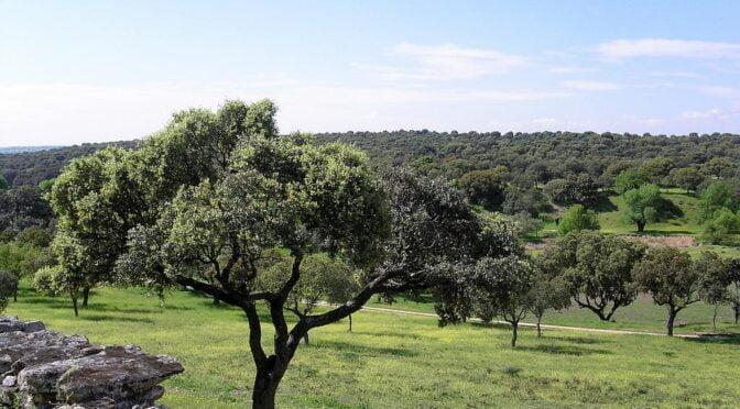 Cuenca Alta del Manzanares Regional Park