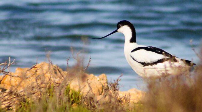 Lagunas de la Mata y Torrevieja Natural Park