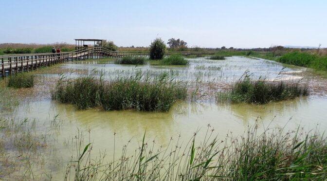 El Hondo Natural Park