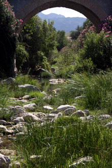 An example of a shallow river habitat along the Rio Guadalete in the Sierra Grazalema, Andalucia